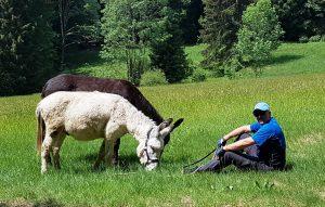 NLP Training mit Eselwandern
